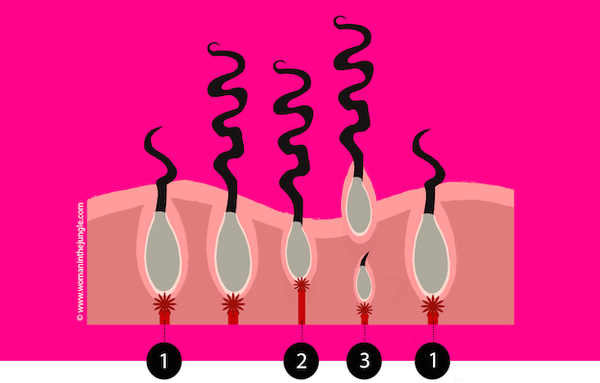 Woman-In-The-Jungle-Hair-growth-cycle-stages  2